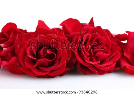 beautiful red roses and petals isolated on white - stock photo