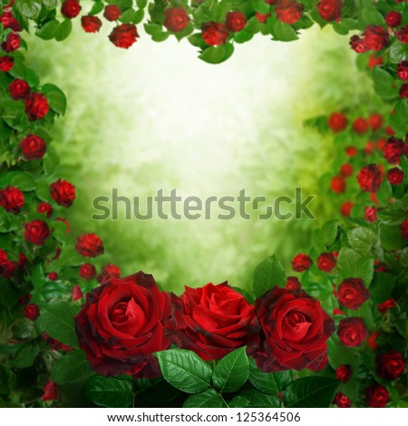 beautiful red roses background - stock photo