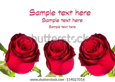 Beautiful red roses over white background