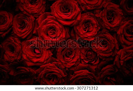 Beautiful red roses with drops of water - stock photo