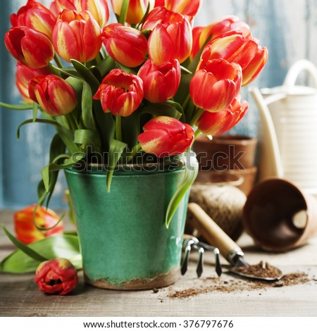 Beautiful red tulips bouquet and garden tools on wooden table - stock photo