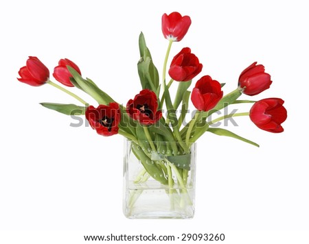 Beautiful Red Tulips Square Glass Vase Stock Photo Royalty Free