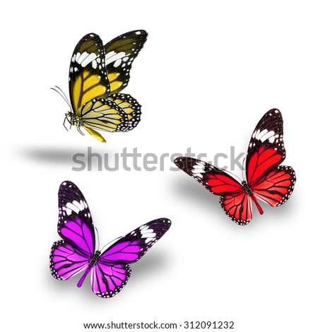 Beautiful Red Yellow Purple butterfly flying up