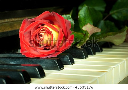Beautiful red-yellow rose on the ivory keys of ancient German piano - stock photo