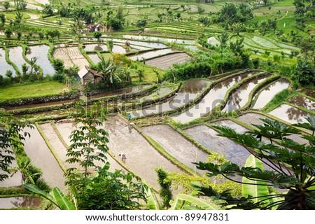 Beautiful rice terraces at Bali - stock photo