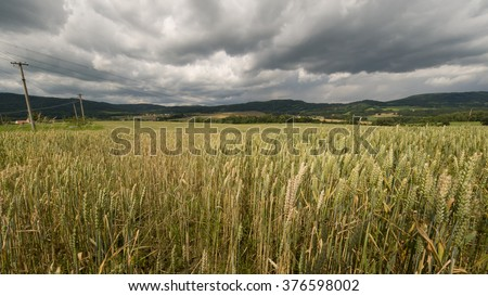 Beautiful rich wheat field before rain with dramatic clouds - stock photo
