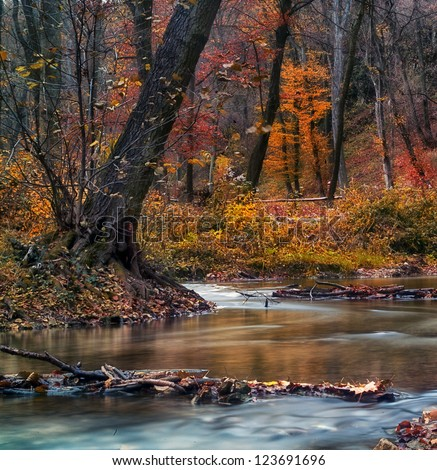 Beautiful river in the forest - stock photo