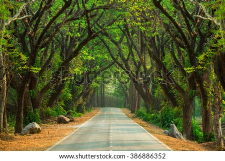 Beautiful road in deep green and green forest in wild - stock photo