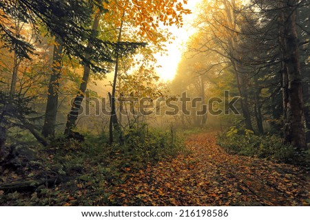 Beautiful road in fall forest covered with mist. - stock photo