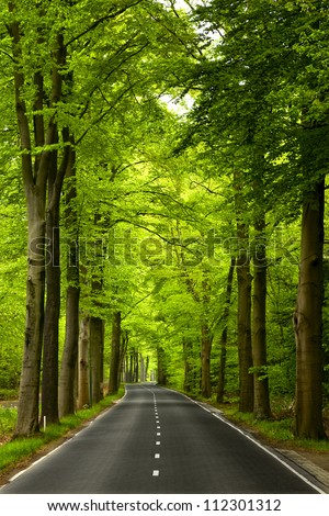 Beautiful road in the middle of beautiful trees - stock photo
