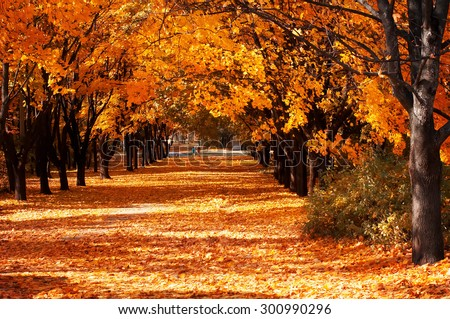 Beautiful romantic alley in a park with colorful trees, autumn landscape - stock photo