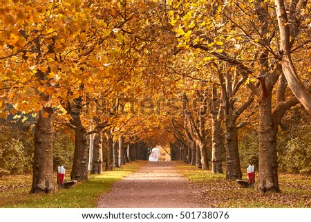 Beautiful romantic alley in a park with colorful trees, autumn landscape