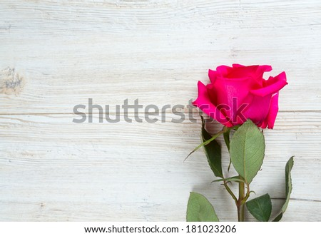 beautiful rose on wooden surface - stock photo