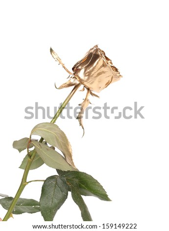 Beautiful rose painted in gold. Isolated on white background.