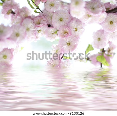 beautiful rose spring flower reflected in water