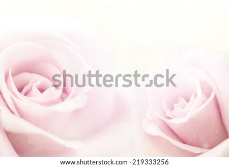 beautiful roses in soft color, Made with blur style for background - stock photo
