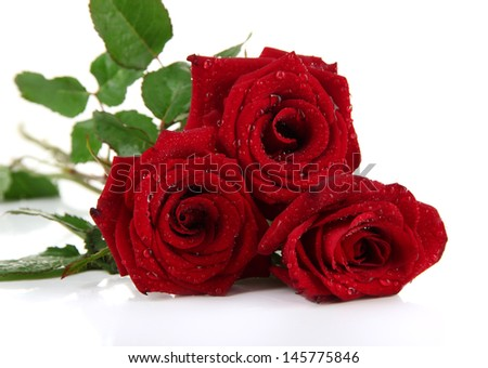 Beautiful roses, isolated on white