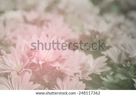 beautiful roses made with color filters/ Soft spring flower  - stock photo