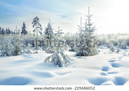 beautiful rural winter landscape with the forest  - stock photo