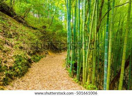 Beautiful rustic winding dirt trail lined by green bamboo forest leads to former site of Tsumago Castle along the Nakasendo route in Japan. Horizontal