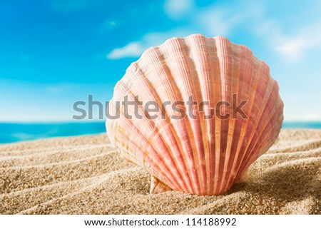 beautiful scallops shell on the sandy beach - stock photo