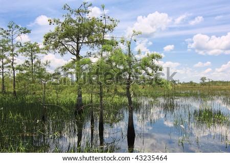 Beautiful scene of the Florida Everglades Landscape - stock photo