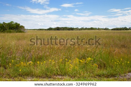 Beautiful scene of the Shark River Slough in the Florida Everglades Landscape. A slough is in essence a broad shallow river covered with sawgrass.  - stock photo