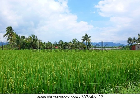 Beautiful scenery in southern Taiwan with lush rice fields, palm trees and mountains in the distance