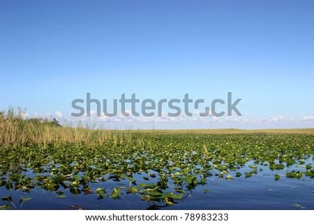 Beautiful scenery of lake in Everglades, Florida - stock photo