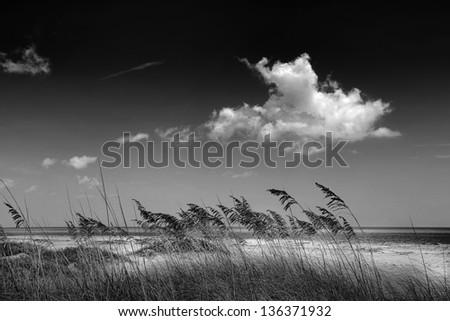 Beautiful scenic beach dunes with Sea Oats (Uniola Paniculata) in Black and White - stock photo