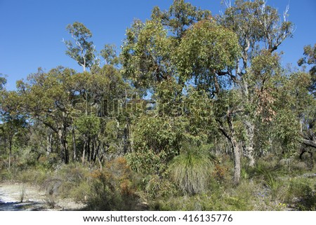 Beautiful scenic view of the secluded Crooked Brook national park in South Western Australia   with  tourists flocking  to observe the beautiful wild flowers , marsupials and birds  in spring time. - stock photo