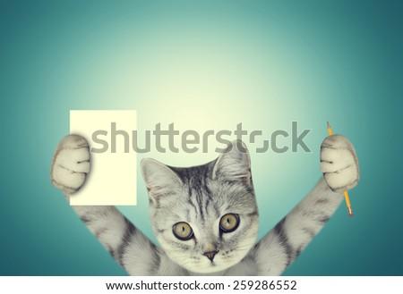 beautiful scottish kitten - stock photo
