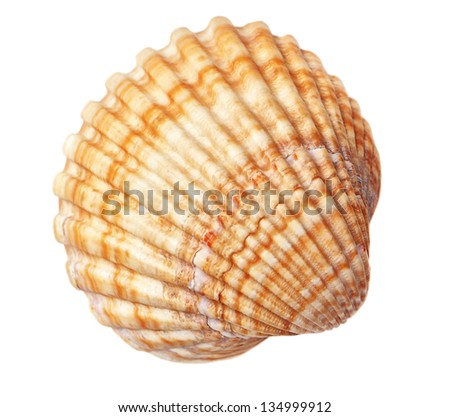 Beautiful sea conch texture. On a white background. - stock photo