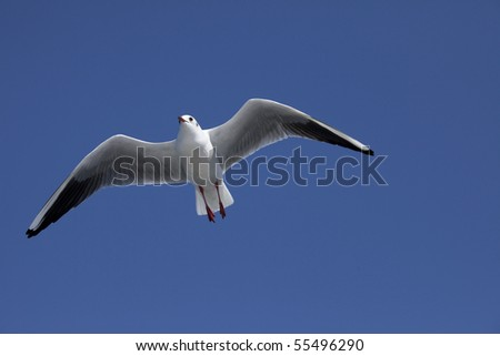 Beautiful sea gull of a feather
