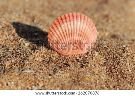 Beautiful sea shell on the sea shore on blurred/Seashell in the sand selected focus on the concept of tourism and recreation