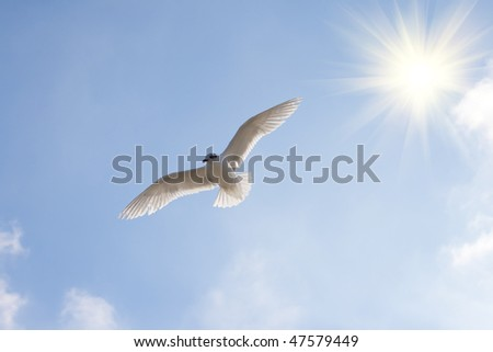 Beautiful seagull against the blue sky in the sun.