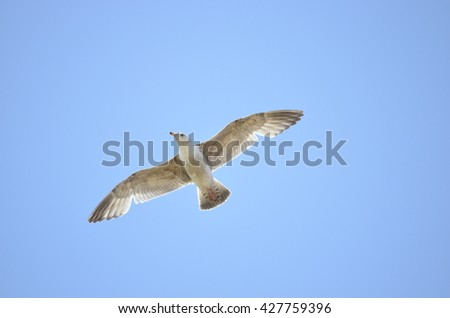 Beautiful Seagull in Blue Sky - stock photo