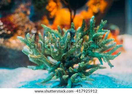 Beautiful seahorse amongst corals. Underwater wildlife wallpaper background.