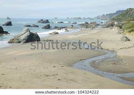 beautiful seascape in pacific coast area, oregon, usa - stock photo