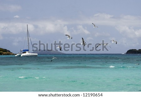 beautiful seascape with catamaran and seagulls flying in caribbean - stock photo