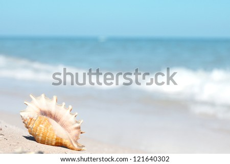 Beautiful seashell on the beach - stock photo