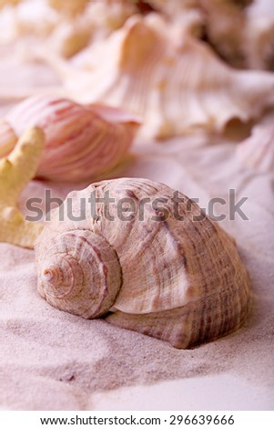 Beautiful seashells on sand background - stock photo