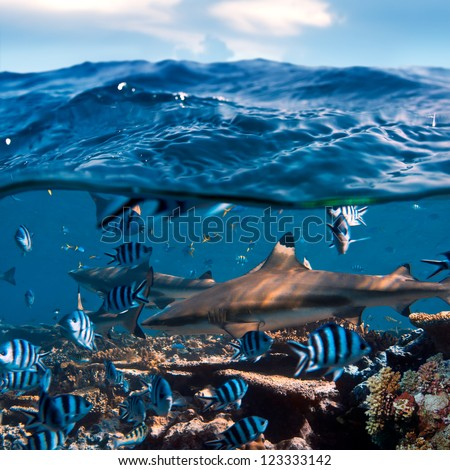 beautiful seaview waterline waves in a shallow and sharks swimming by corals - stock photo