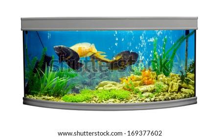 Beautiful semi-circular aquarium with tropical fish on a white background - stock photo