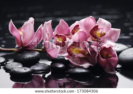 beautiful set of gorgeous orchid on wet stones  - stock photo