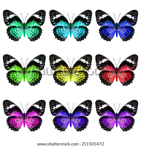 Beautiful set of Leopard Lacewing Butterfly in colorful and fancy color profile - stock photo