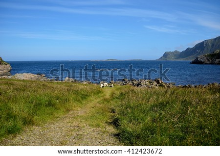 beautiful sheep grazing near blue summer ocean