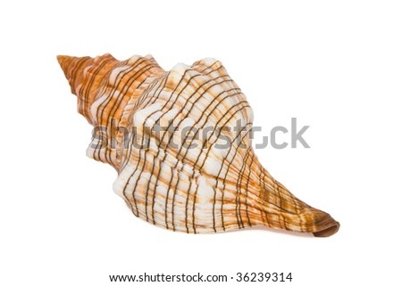 Beautiful shell isolated on white - stock photo