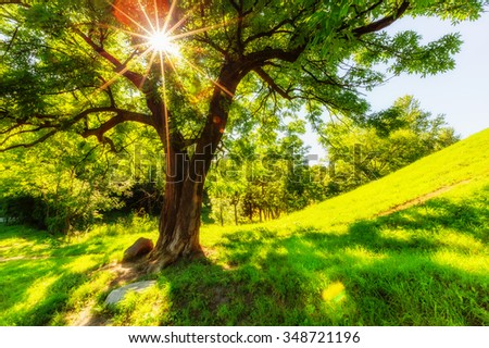 Beautiful shining through leaves of tree - stock photo