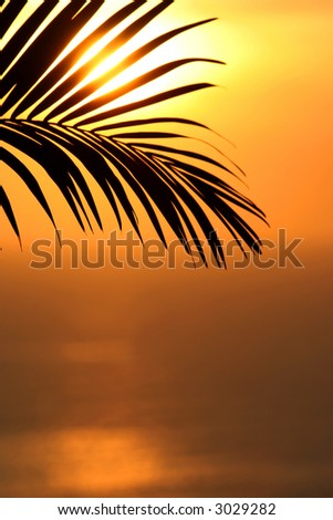 Beautiful shot of a palm tree infront of the sun in south-america. Focus is on the palm and the colours are very hot and soft. Sun is reflecting on the ocean. Shallow depth of field.